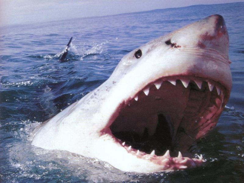 Jon Turteltaub a caccia di un gigantesco squalo assassino in Meg