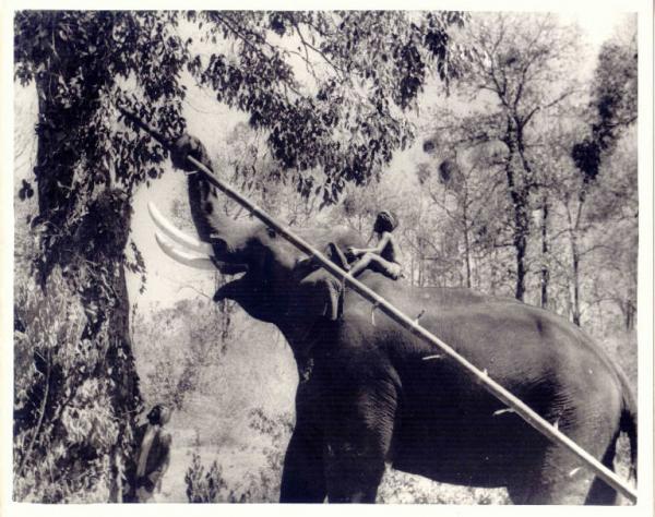Cose da sapere su il libro della giungla di jon favreau