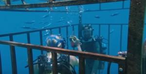47 metri mandy moore film