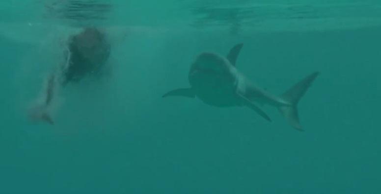 Abbandonati tra gli squali bianchi in POV nel trailer di Open Water 3: Cage Dive