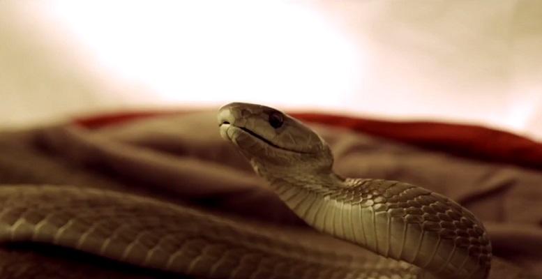 Un mamba nero tiene in scacco una coppia nel trailer di Serpent