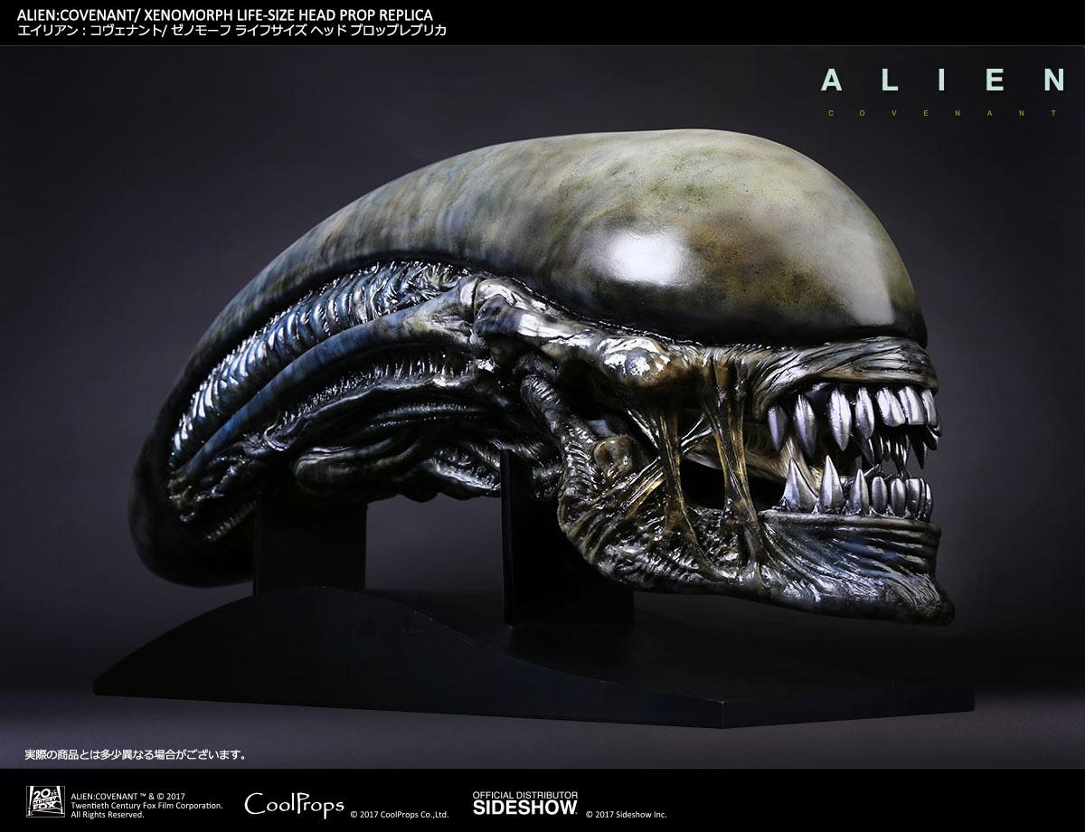Urlare è doveroso con la replica 1:1 della testa di Xenomorfo di Alien: Covenant della Sideshow