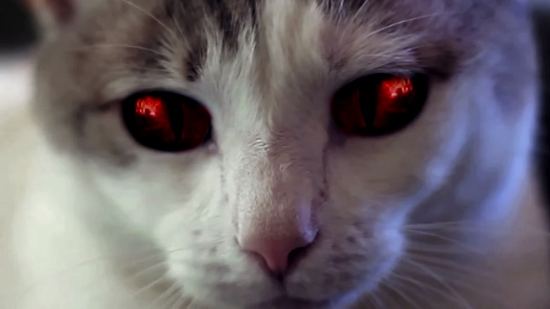 Doug Jones pratica l'esorcismo a un gatto posseduto nel trailer di Hell's Kitty