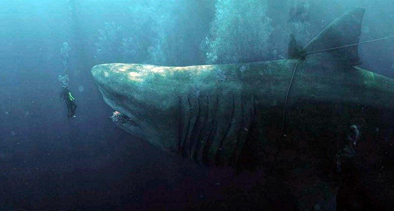 """Jon Turteltaub su Shark – Il Primo Squalo: """"Ho dovuto tagliare tutto il sangue e i momenti truci"""""""