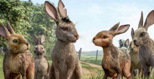 la collina dei conigli serie netflix 2018