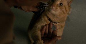 Captain Marvel (2019) gatto goose