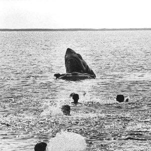 lo squalo scena eliminata spielberg 1975 film (2)