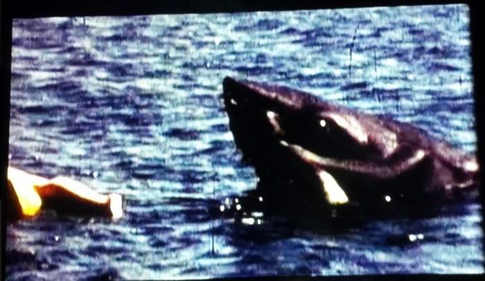 lo squalo scena eliminata spielberg 1975 film