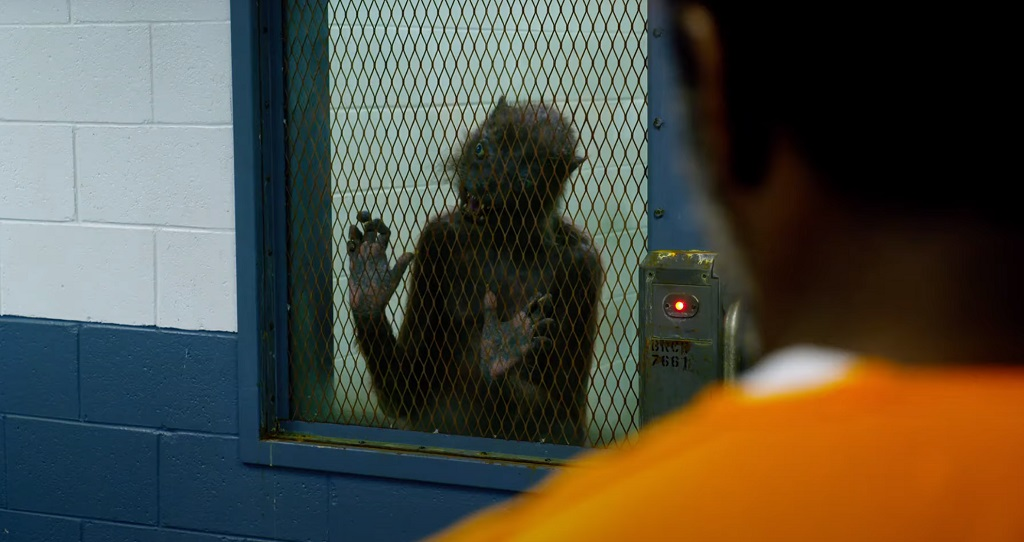 The Suicide Squad - Missione suicida film 2021