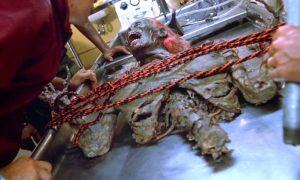 il ritorno dei morti viventi film 1985 zombie